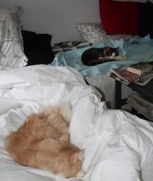 Lugn och ro mellan ny och gammal katt